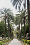 Valencia Spain, Avenue at evening Royalty Free Stock Images
