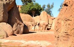 Valencia Zoo, Olifanten Royalty-vrije Stock Afbeeldingen