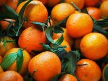Valencian orange und orange Bl?ten spanien stockfoto
