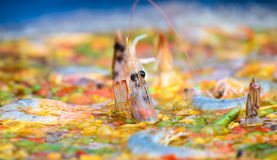 Valencian Paella With Rice And Seafood Stock Images