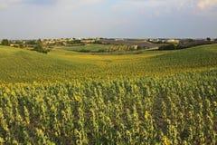 Valensole - Provence Royaltyfri Fotografi