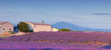 Valensole Provence Fotos de Stock Royalty Free