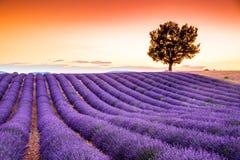 Valensolelavendel in de Provence, Frankrijk royalty-vrije stock foto