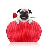 Valentijnskaartenhond Stock Foto