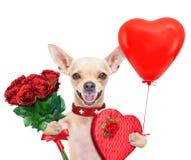 Valentijnskaartenhond Stock Afbeeldingen