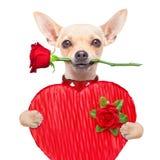 Valentijnskaartenhond Stock Afbeelding