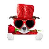 Valentijnskaartenhond in liefde Royalty-vrije Stock Foto