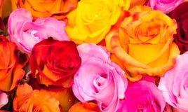 Valentim colorido da beleza das flores das rosas fotos de stock royalty free