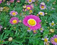 Valentim da flor Fotografia de Stock Royalty Free