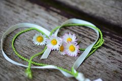 Valentim, dia Daisy Flower Wishing Card de s fotografia de stock