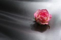 Valentim do conceito do dia da mãe, rosa do rosa no fundo cinzento de seda Fotografia de Stock