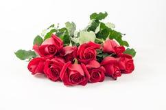 Valentim feliz da flora da flor de Rosa no fundo branco Imagens de Stock Royalty Free