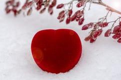 Valentin dag, röd hjärta på snökvist av barberryen i frost arkivfoton