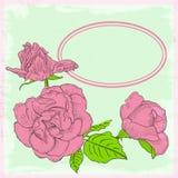 Valentin dag. Rosa rosor. Vektorillustration. EPS 10 Royaltyfri Foto