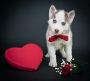 Valentin dagvalp arkivfoton