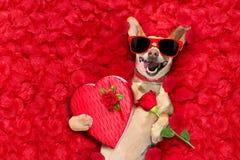 Valentin dog med rosa kronblad arkivfoton