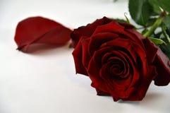 valentin för dag s royaltyfri fotografi