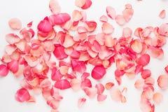 valentin för dag s Rosa blommakronblad på vit bakgrund Hjärta för två rosa färg Lekmanna- lägenhet, bästa sikt, kopieringsutrymme royaltyfria foton