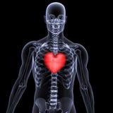 valentin x för stråle för 2 hjärta skelett- royaltyfri illustrationer