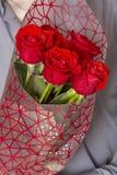 Valentindag eller förslag Ung lycklig stilig man som rymmer den stora gruppen av röda rosor i hans hand på grå bakgrund fotografering för bildbyråer