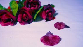 Valentindag med längd i fot räknat av rosen och kronblad