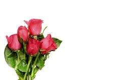 Valentindagbakgrund med rosa rosor Arkivbild