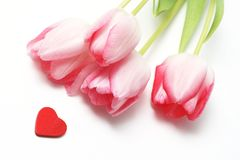 Valentine. Heart and pink tulip Royalty Free Stock Photo