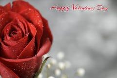 valentine Obrazy Royalty Free