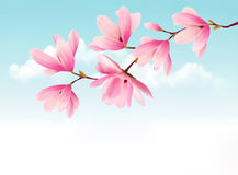 Valentine background with pink flowers. Stock Images
