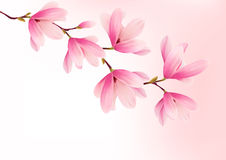 Valentine background with pink flowers. Stock Photos