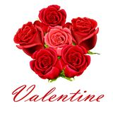 Valentine bunch of roses Royalty Free Stock Photo