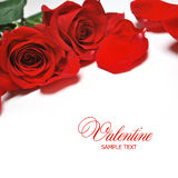 Valentine card. With red roses Royalty Free Stock Image