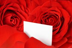 Valentine card amidst red roses and petals Stock Photos