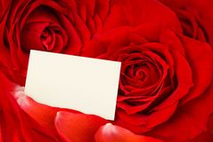 Valentine card amidst red roses and petals Stock Images
