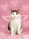 Valentine card with fat smiling cat. With angel wings and heart frame on the pink background Stock Photography