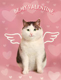 Valentine card with fat smiling cat Stock Photography