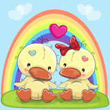 Valentine card with Lovers Ducks Stock Image