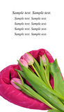 Valentine cards with tulips Royalty Free Stock Image