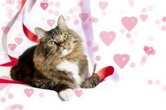 Valentine Cat Fotografia Stock