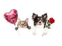 Valentine Cat et chien accrochant au-dessus du signe Photographie stock libre de droits