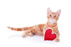 Valentine Cat. A valentine cat with heart Stock Images