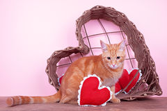 Valentine Cat. A valentine cat with heart Royalty Free Stock Photography