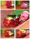 Valentine collage with pink  roses Stock Photos