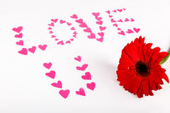 Valentine concept. Inscription Love You with hearts and red gerbera flower on White backround. Selective focus. Royalty Free Stock Photography
