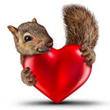 Valentine Cute Squirrel. As a saint valentine's celebration symbol with a friendly happy wild animal holding a red heart with 3D illustration elements Stock Images