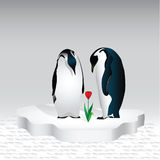 Valentine day. A couple of penguins are looking at a flower that grew out of the warmth of their love Royalty Free Stock Images