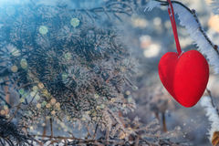 Valentine Day card. Decorative velvet red heart on snow-covered fir branch.Valentine Day card. Winter holidays. Valentines theme Stock Photo