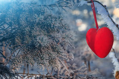 Valentine Day card. Decorative velvet red heart on snow-covered fir branch.Valentine Day card. Winter holidays. Valentines theme Royalty Free Stock Images