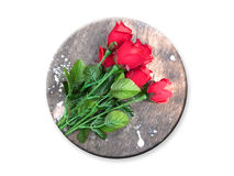 Valentine day card. Roses on white background Stock Image