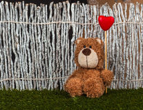 Valentine day concept. Teddy bear with heart is sitting on the g Royalty Free Stock Image